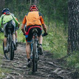 Mountainbike verhuur Utrechtse Heuvelrug